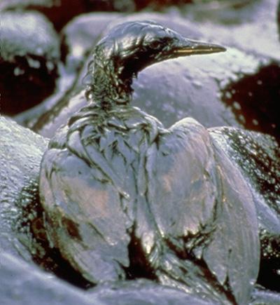 Oil spill devastation