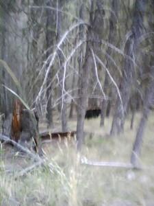 Bear through the trees