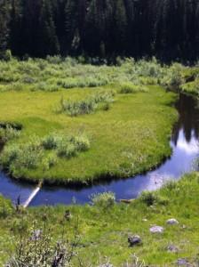 Beaver landscaping