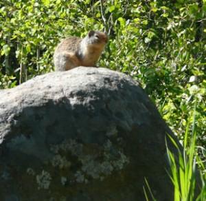 Little furry creature on rock