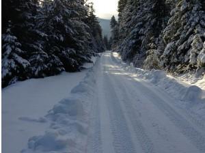 Gatored road